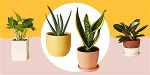 11 Best Indoor Plants For Your Home  U2014 Air
