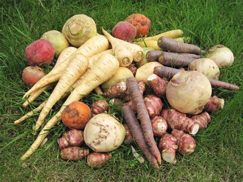 romarin cuisine une recette facile à faire avec les anciens légumes du jardin