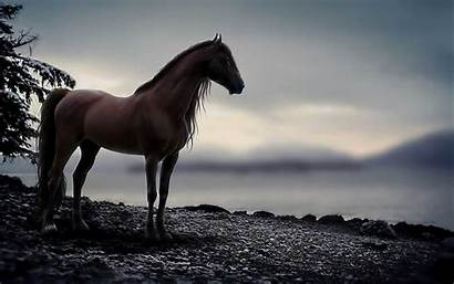 Horse Arabian Amazing Android 2404 Wallpaperz