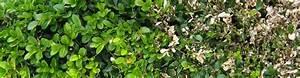 Wucherungen An Pflanzen : planzenhof paulwitz pflanzen floristik accessoires alles aus einem gartenbetrieb in ~ Buech-reservation.com Haus und Dekorationen