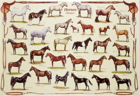 horses horse breeds many types different breed poster posters equine around animals 1000 pieces among friends print dog bred charts