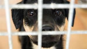 Kalter Fussboden Was Tun : hund misshandelt was tun welt ~ Lizthompson.info Haus und Dekorationen