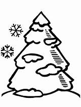 Pine Coloring Tree Popular Colouring sketch template