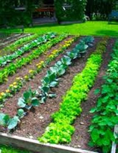 how to mulch vegetable garden how to make your own vegetable garden soil 5 guides for inexpensive soil home improvement day