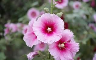 vinca flower flower names in and फ ल क न म list of flowers