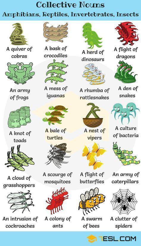 animal group names  collective nouns  animals