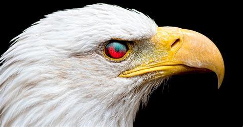 What Is My Spirit Animal? - Quiz - Quizony.com