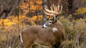 When Do Bucks Shed Their Antlers by Best Places To Hunt Whitetail Deer The Survival Life