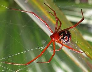 714 best images about Spiders & other Arthropods on ...