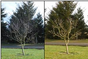 time to prune fruit trees fyi 98642