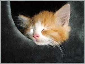 Schlaf Gut Bilder Kostenlos : schlaf gut und tr um was sch nes foto bild tiere haustiere katzen bilder auf ~ A.2002-acura-tl-radio.info Haus und Dekorationen