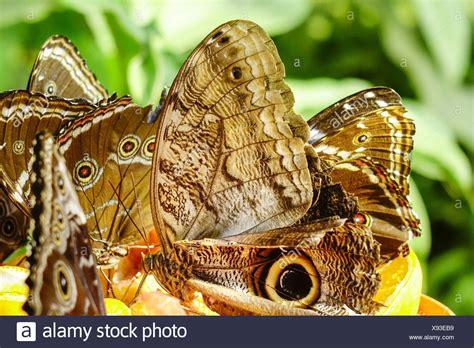 Botanischer Garten München Schmetterlinge by Tropische Schmetterlinge Stockfotos Tropische
