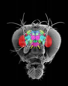 DARPA Wants to Turn Insect Brains Into Robot Brains…
