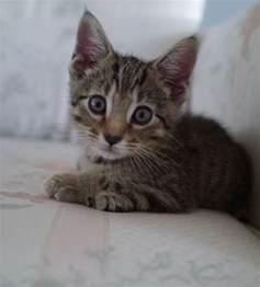 Super Cute Animal