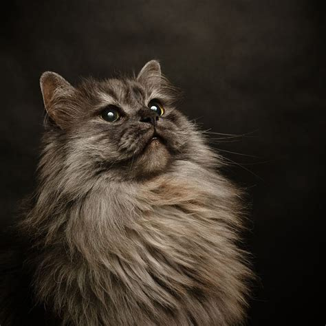 professional cat photography pet photo contest results