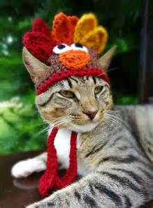 thanksgiving cat cats challenge dogs to a thanksgiving fashion showdown