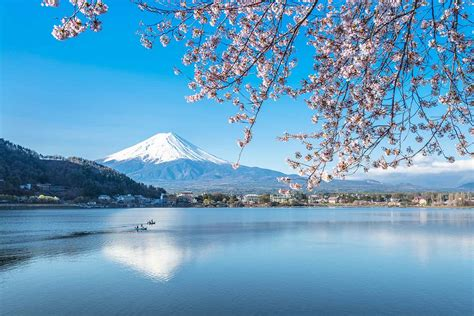 japan cherry blossoms  mt fuji motorcycle