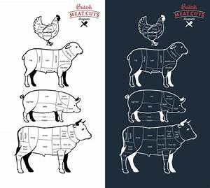 U1408 Cow Diagram Of Meat Cuts Stock Images  Royalty Free Beef