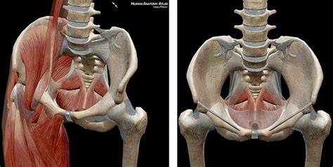 muscles of the pelvic floor together form pelvis muscles form the pelvic floor and walls of the