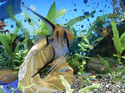 les plus beaux aquarium de les plus beaux poissons de mon aquarium