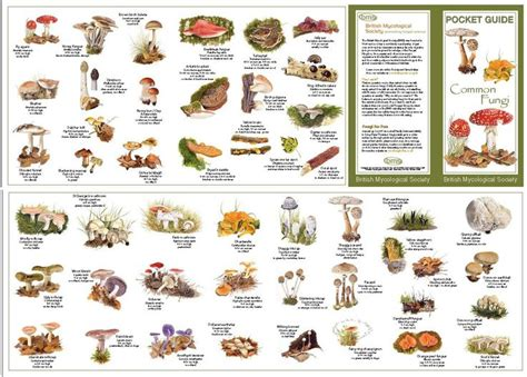 The Pocket Guide To Common Fungi Really Is A Pocket-sized