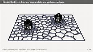 Dynamische Belastung Berechnen : meeresplankton als konstruktionsvorbild wissen umwelt dw ~ Themetempest.com Abrechnung