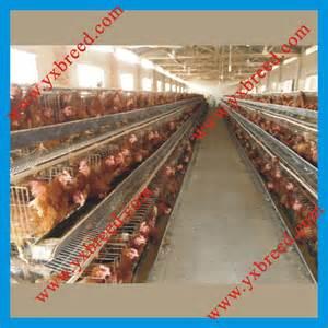 Chicken Poultry Farm Equipment