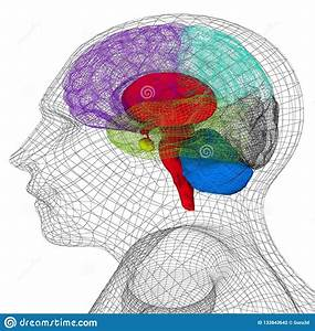 Wire Human Head Model With Brain Stock Illustration