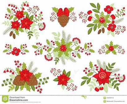 Pine Christmas Vector Floral Cones Berries Poinsettia
