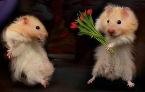 Valentinstag Lustige Bilder : lustige tierfotos teil 2 private tierschutzinitiative ~ Frokenaadalensverden.com Haus und Dekorationen