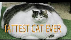The fattest cat in the world - YouTube