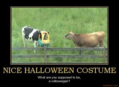Funny Cow Memes - funny images costumed cow wallpaper and background photos 30702055