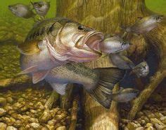 bass images  fish largemouth bass fishing wallpaper