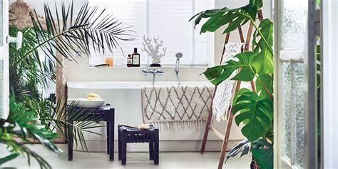 plantes salle de bain quelles plantes pour une salle de bains