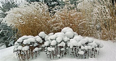 winter garden interest brendas blumenladen