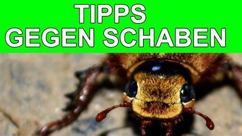 Gegen Küchenschaben by Tipps Gegen Schaben In Der K 220 Che 2017