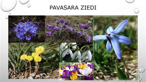 Pavasaris - YouTube