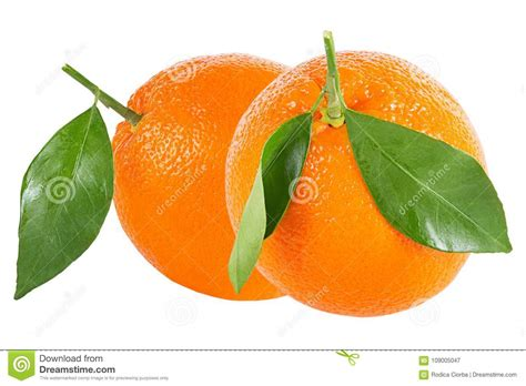 Two Whole Oranges With Leaf Isolated White Stock Image