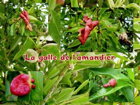 http://www.visoflora.com/photos-nature/photo-taphrina-deformans.html
