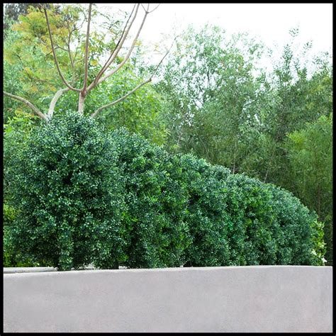 outdoor faux plants outdoor faux boxwood shrubs artificial plants unlimited