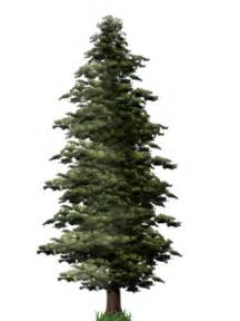 forest backdrop pine tree png file png mart