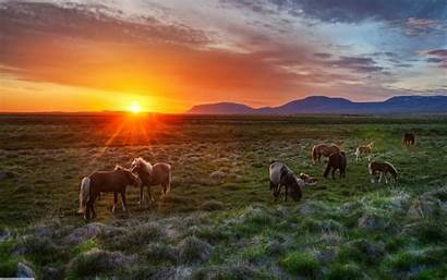 Horses Sunset Horse Wild Wallpapers Landscape West