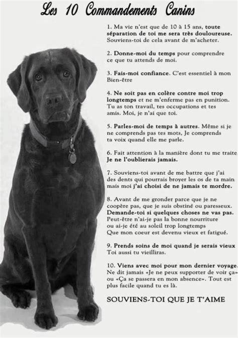 si鑒e auto pour chien texte d amour pour nos amis les chiens de kaizeur69160