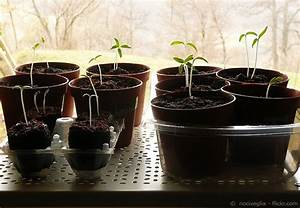 Tomaten Wann Pflanzen : tomaten ziehen f r anf nger 5 schritte zum erfolg garten hausxxl garten hausxxl ~ Frokenaadalensverden.com Haus und Dekorationen