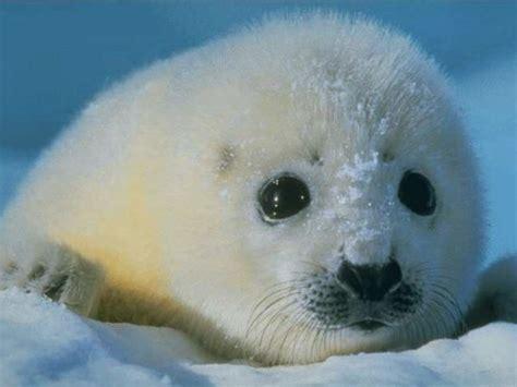 imagenes de animales en  de extincion  especies