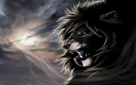 lion full hd wallpaper  background image