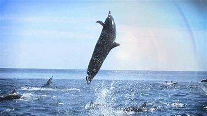 Dolphin Jumping Dolphins Animated Gifs Amazing Pod