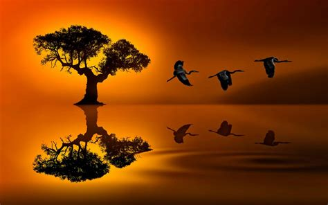sunset lonely tree red sky reflection  lake water travel