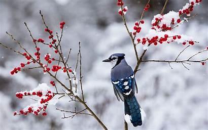 Snow Wallpapers Winter Bird Desktop Birds Background