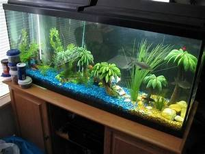 blue fish tank dector ideas pictures of fish tank With decorative fish tank ideas things to consider